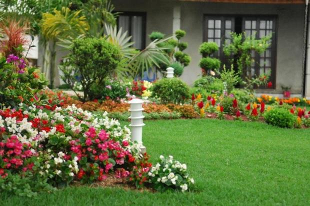 plantas para jardim muito sol:Jardim De Flores